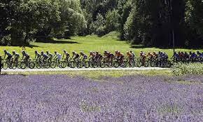 Tour de Lavender - August 5 2017